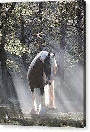 Mystical Morning Acrylic Print by Terry Kirkland Cook