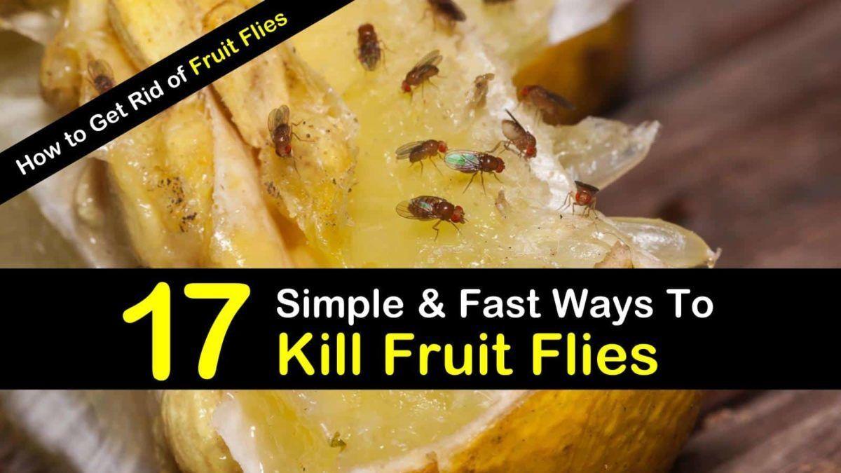17 Fast & Easy Ways to Get Rid of Fruit Flies in 2020 ...