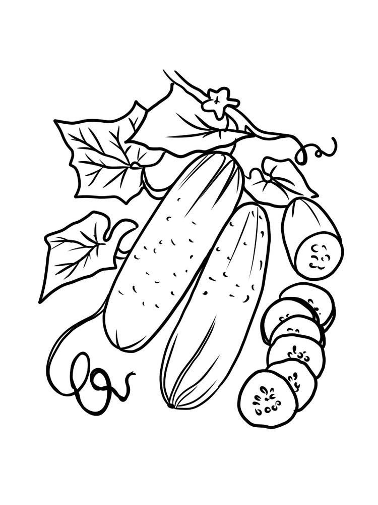 Cucumber Coloring Page Print Cucumber Is Included In Annual Short Lived Fruit Vegetab Coloring Pages Printable Christmas Coloring Pages Fruit Coloring Pages