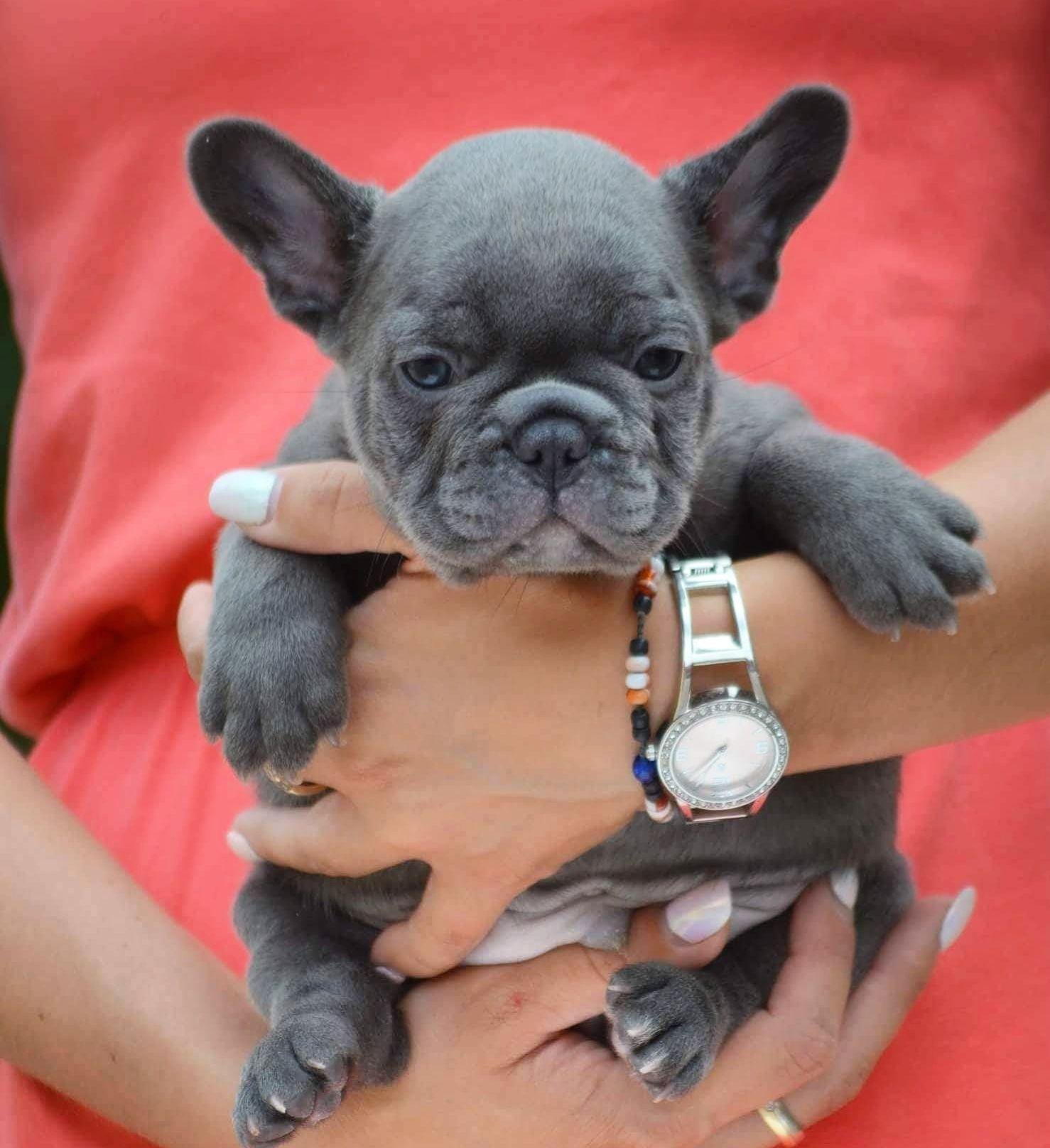 PORSCHE. Mini solid blue boy. Price 2000 euro French