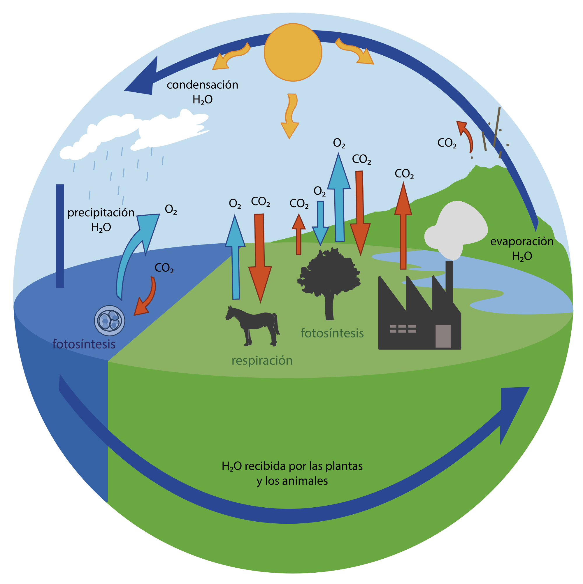 7 Ideas De Oxigeno Oxigeno Ciclo Del Carbono Fotosintesis