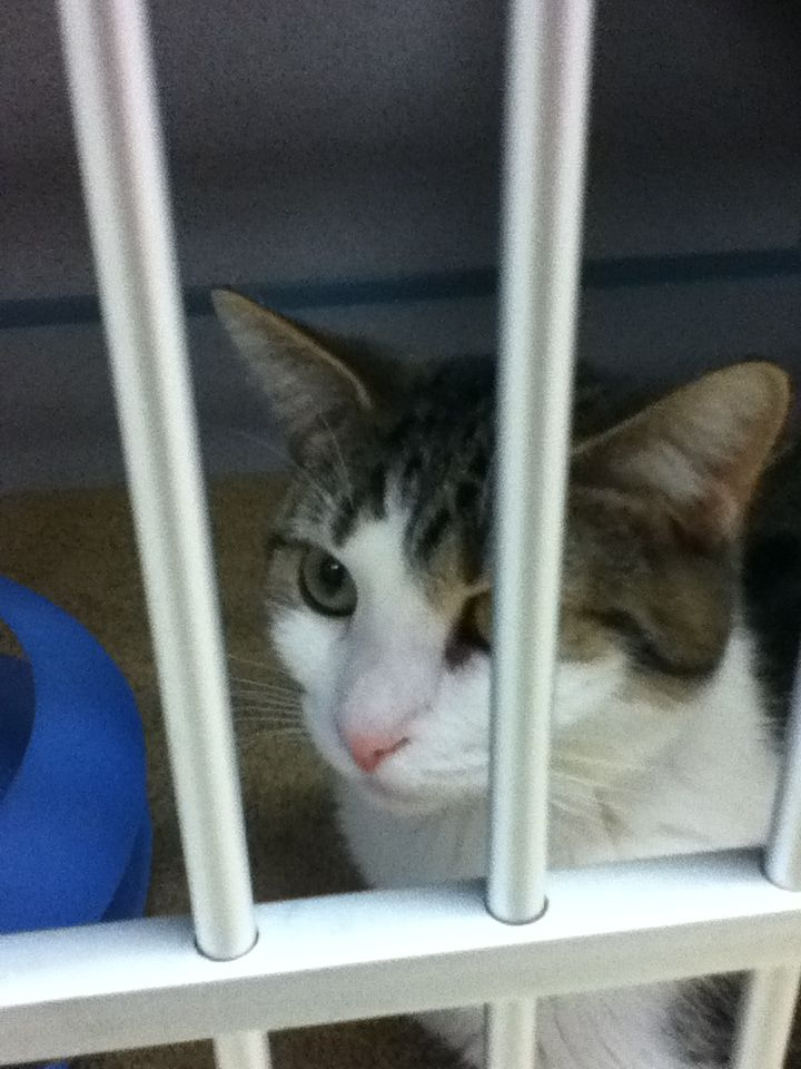 18+ Glynn county animal shelter images