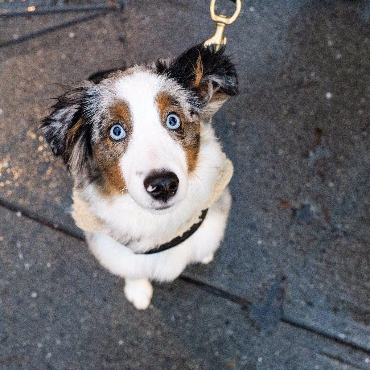 Find Out More On The Exuberant Aussie Dogs