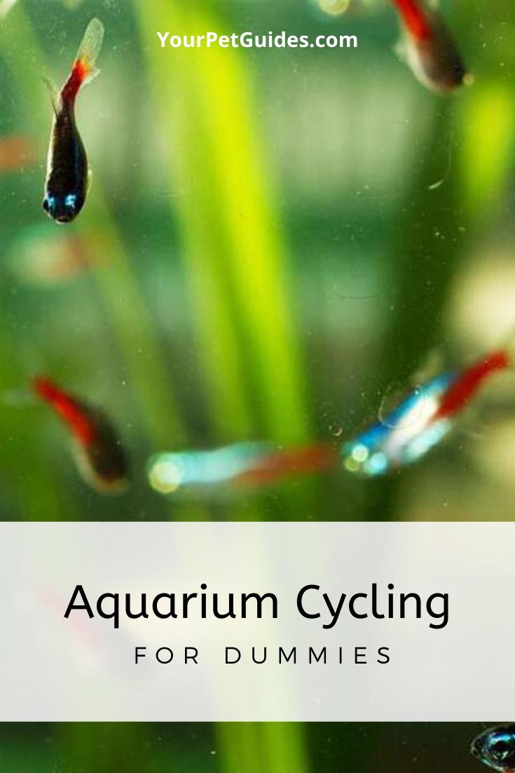 Pin On Aquarium Beginners