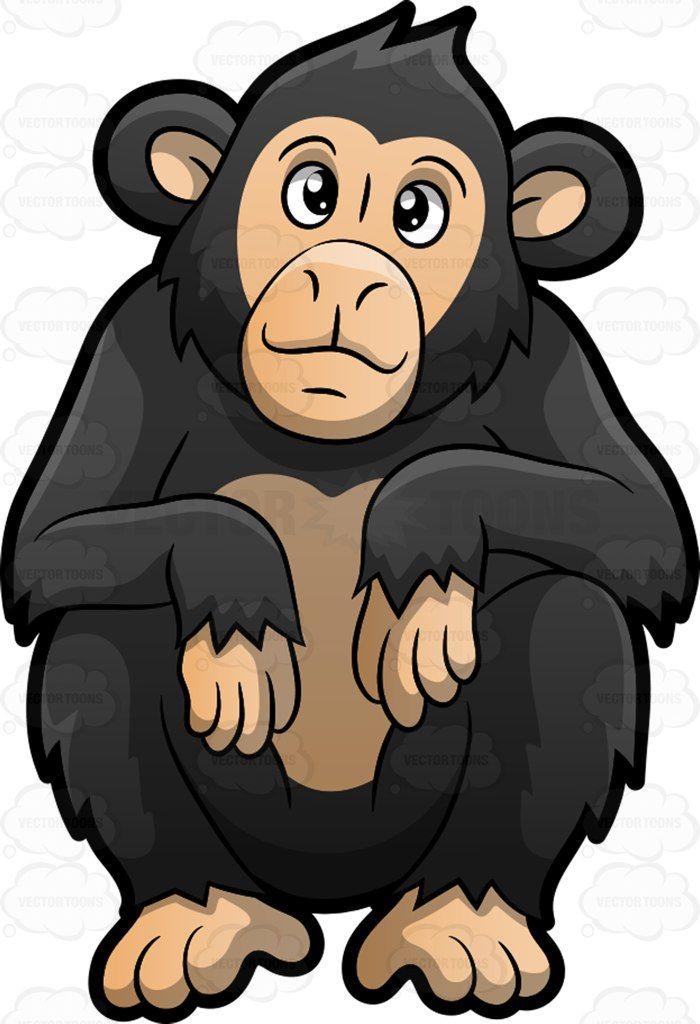 a cute chimpanzee chimpanzee rh pinterest com