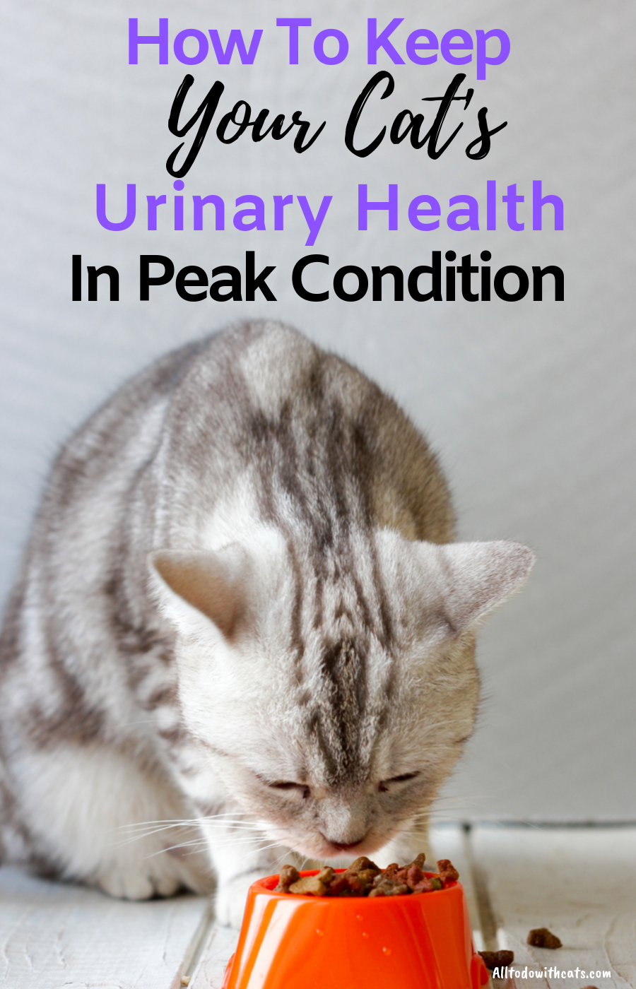 Best Urinary Tract Cat Food To Support Your Kitty's