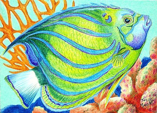 Tim Marsh Colored Pencil Tropical Fish Art Sea Creatures Art