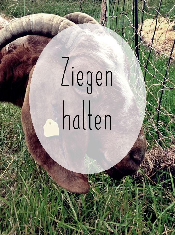 Alles Zu Den Themen Selbstversorgung Und Ziegen Halten Futterung Weidemanagement Ziegenstall Milchstand Hufe Sch Ziegenhaltung Zwergziegen Hinterhofhuhner
