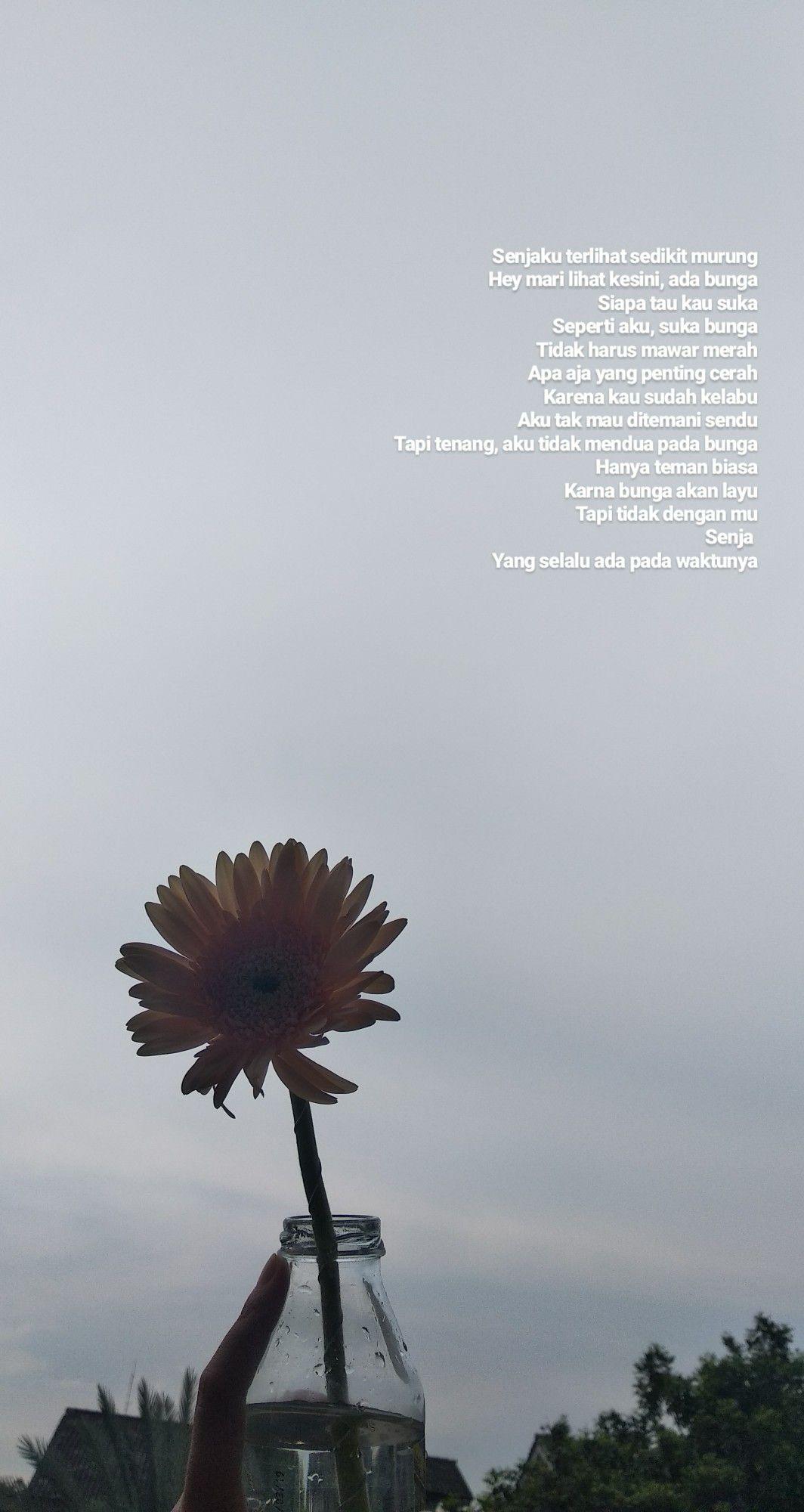 quote sky inspiration flower bunga maui mawar
