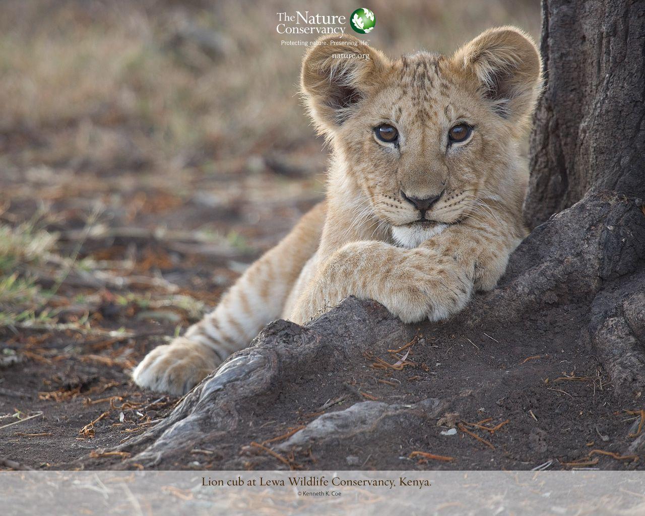 Pin On Animals Nature
