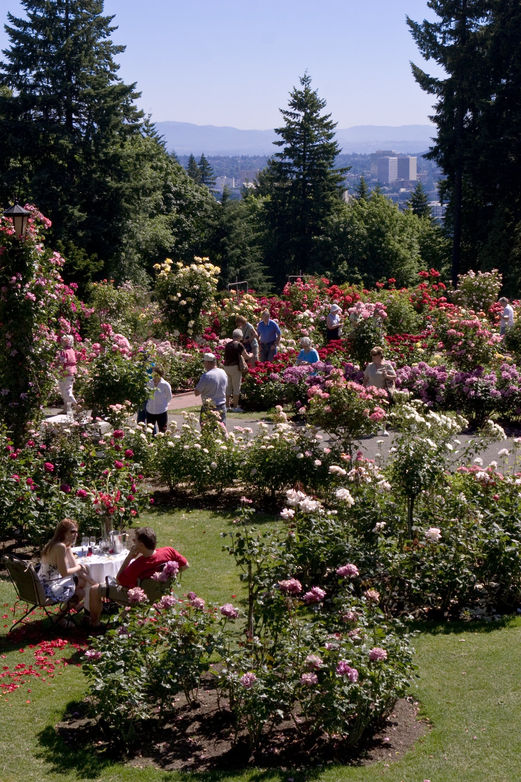 International Rose Test Garden, Photo Credit: Travel Portland ...