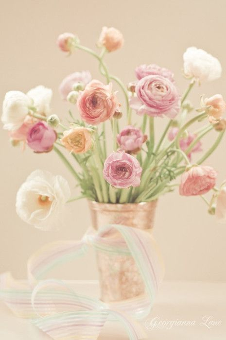 3 Ranunculus Beautiful Flowers Pretty Flowers Flower Arrangements