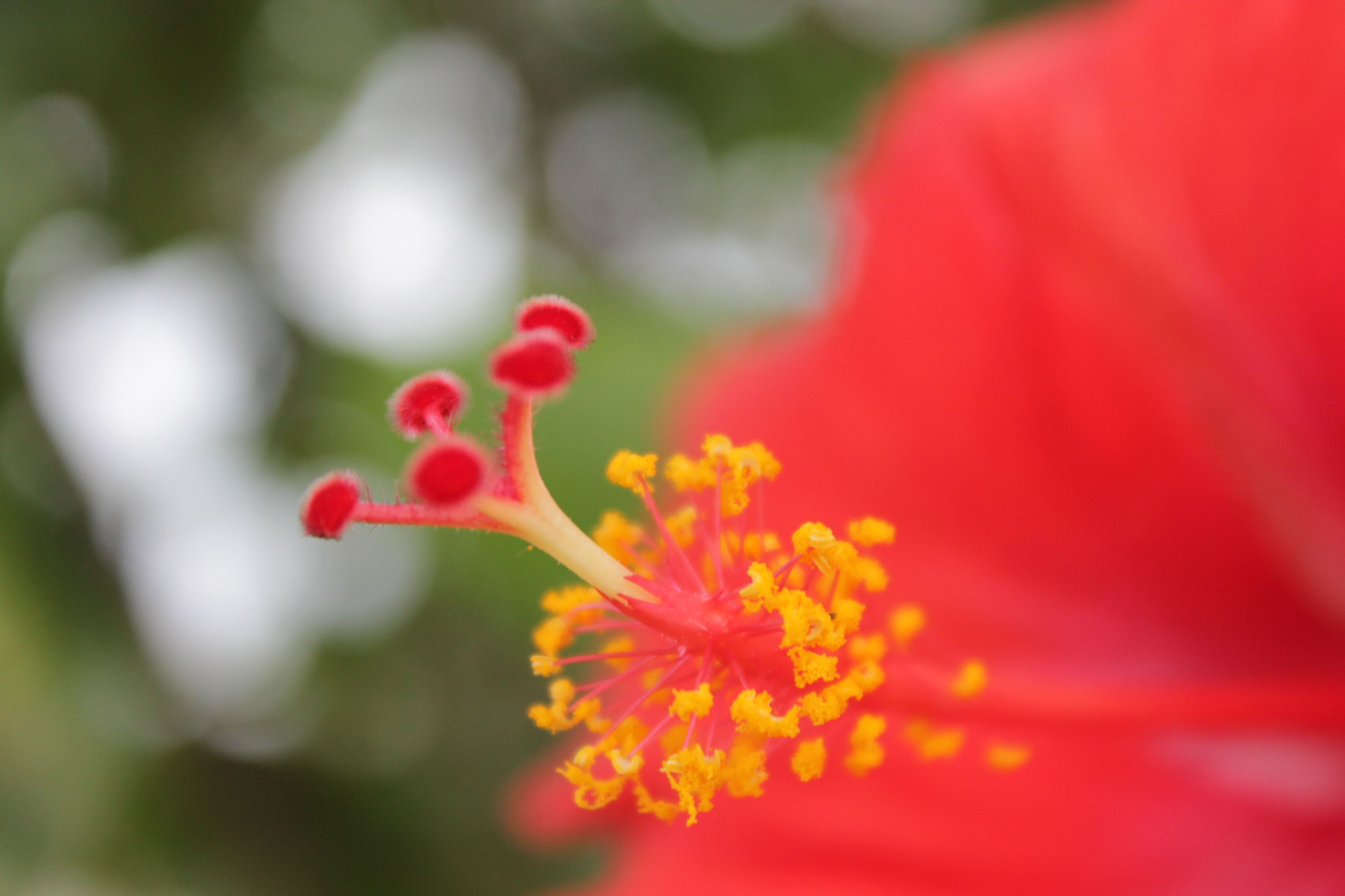Check Out The Hibiscus Flowers Pollen Grains Taken By Me
