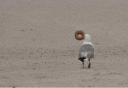 Q: Why do seagulls live near the sea? A: Because if they lived ...