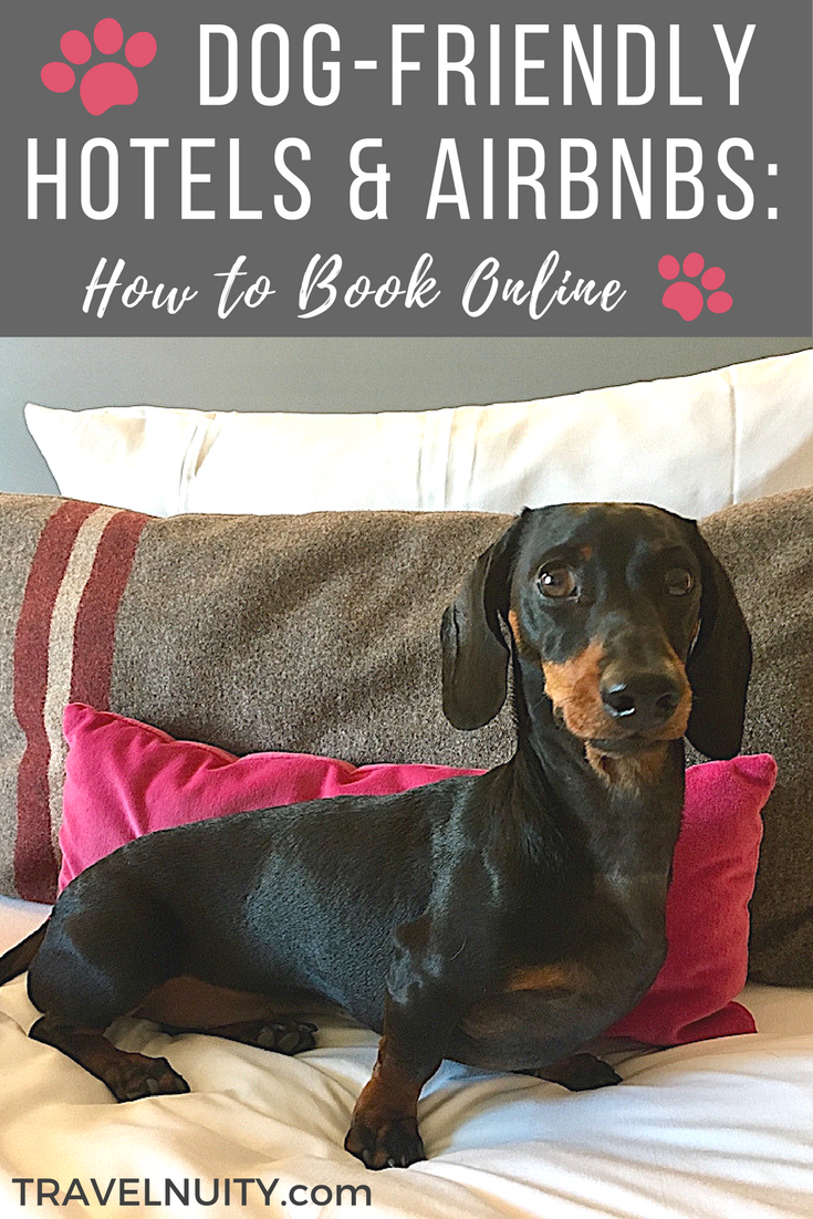 How To Book Dog Friendly Accommodation Dog Friendly Accommodation Dog Friendly Hotels Dog Friends