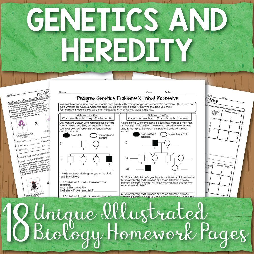 Homework Pages High school biology, Biology