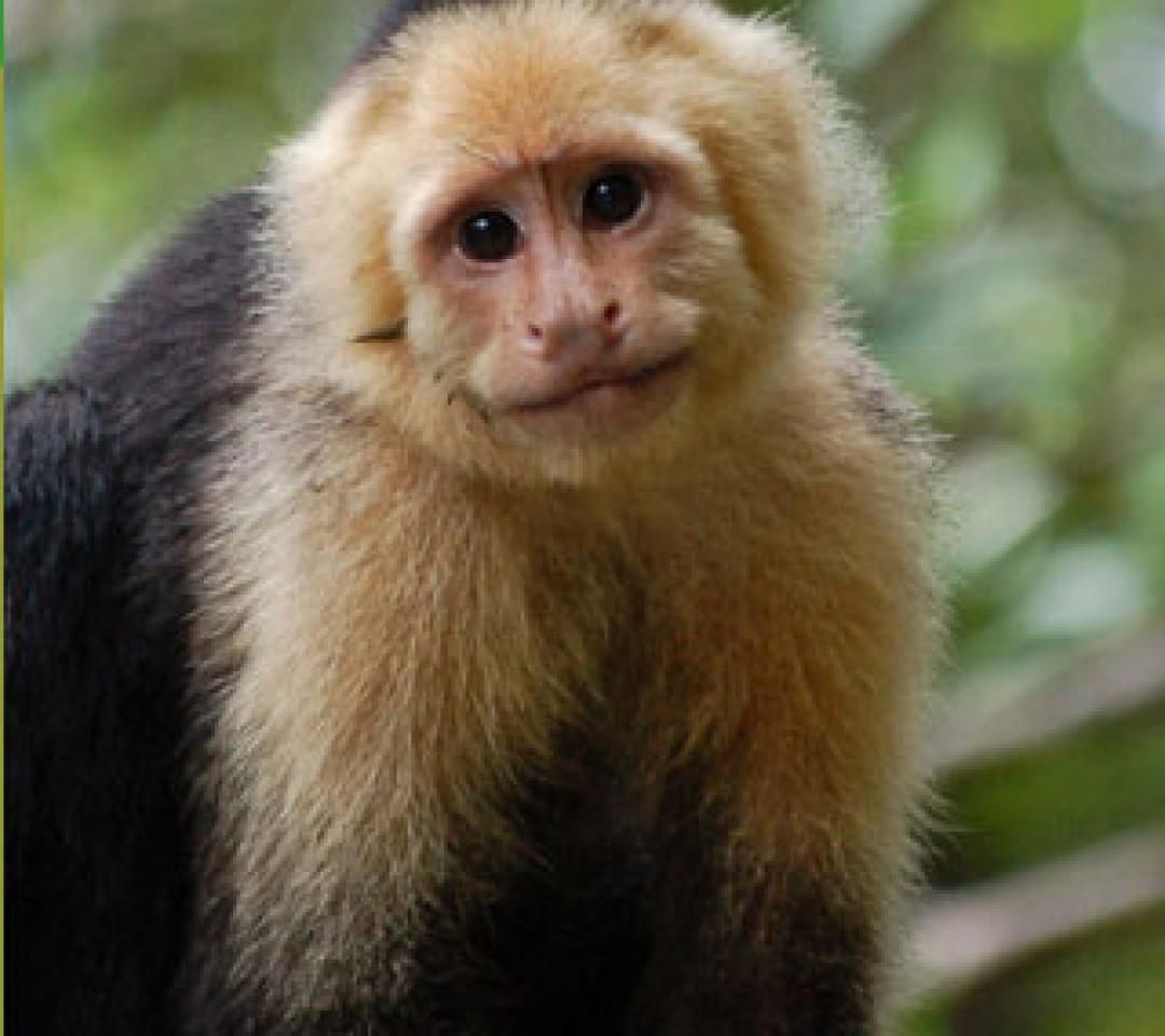 27+ List Different Types of Monkeys Facts and Information ...