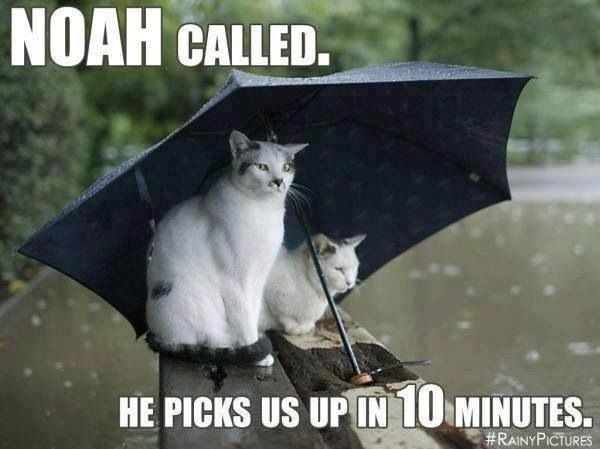 Too Much Rain Cat Umbrella Funny Animals Cats