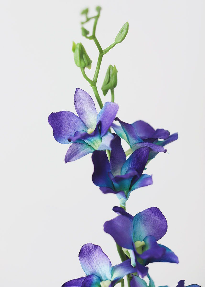 Silk Dendrobium Orchid In Purple And Blue 35 Tall Orchids Dendrobium Orchids Orchid Drawing