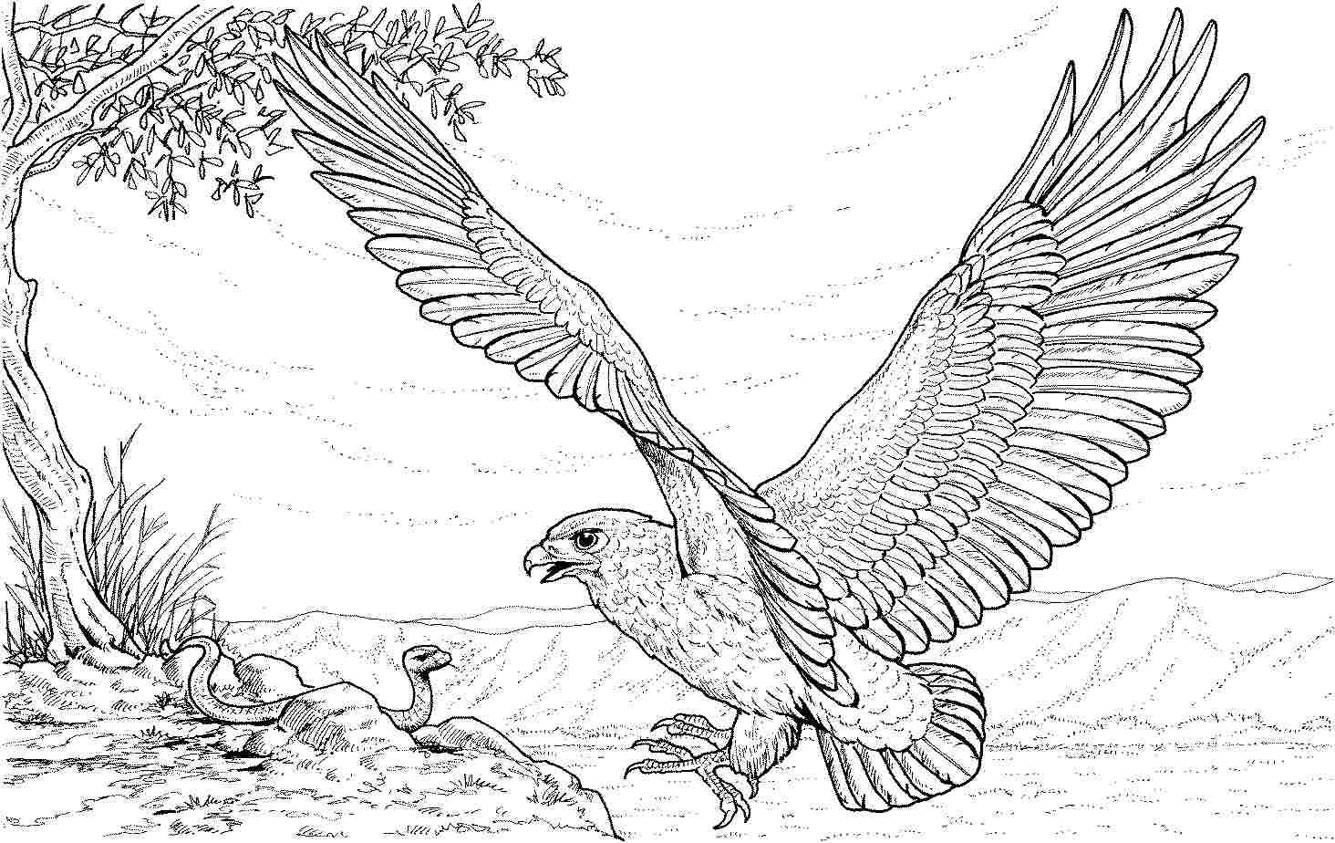 90 Animal Eagle Coloring Pages Printable Jpg 1 464 924 Pixels Animal Coloring Books Snake Coloring Pages Farm Animal Coloring Pages