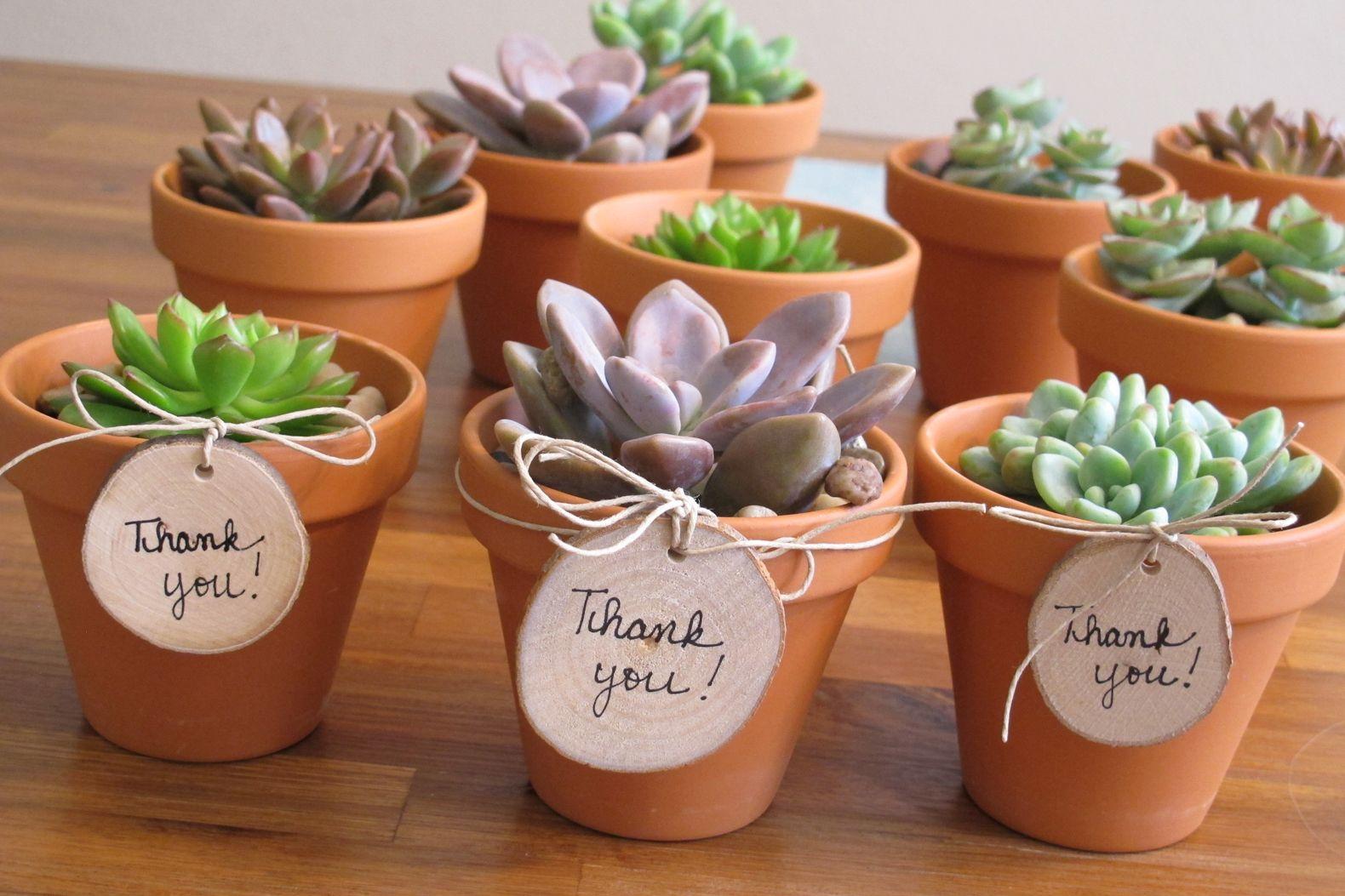 Diy teachers gift simple sweet mini succulents
