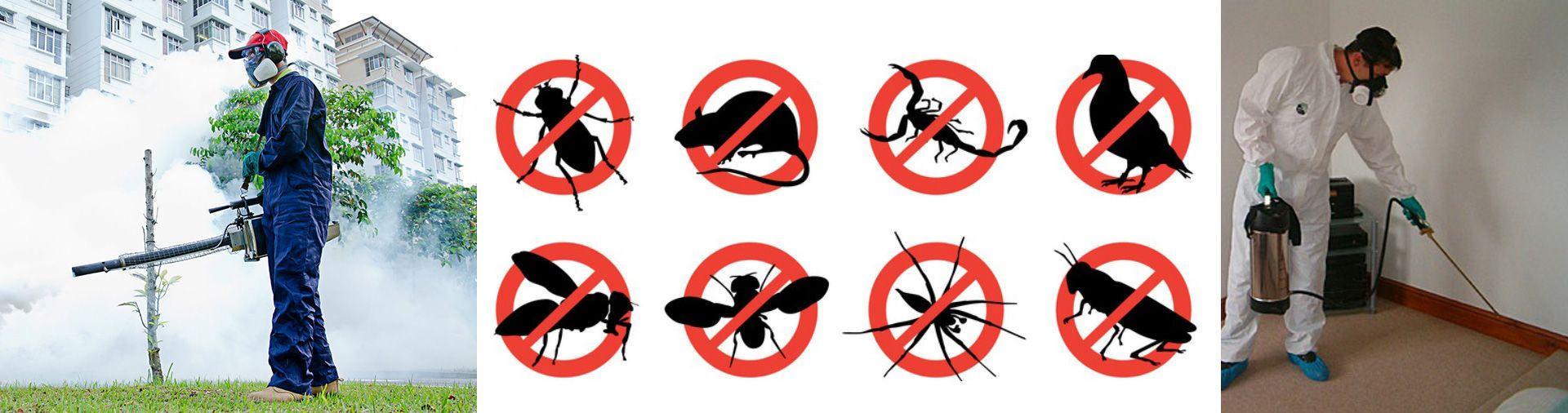 شركه مكافحه حشرات بمكه شركة اركان الرياض0557830001 https