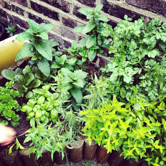 Lipstick Loves - my herb garden
