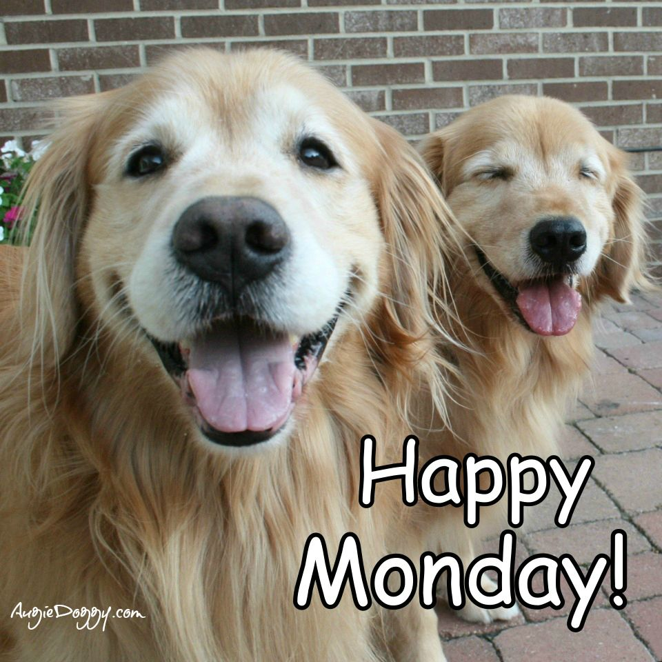 Happy Monday from Augie and Ti! www.AugieDoggy.com/apps ...