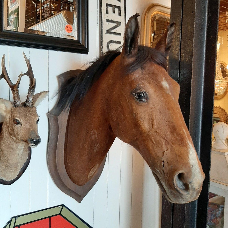 Opgezet Paardenhoofd Taxidermie Paard Hoofd Taxidermie Interieur Decoratie Huis Woning Beeld Paardenhoofd Taxidermie Paarden