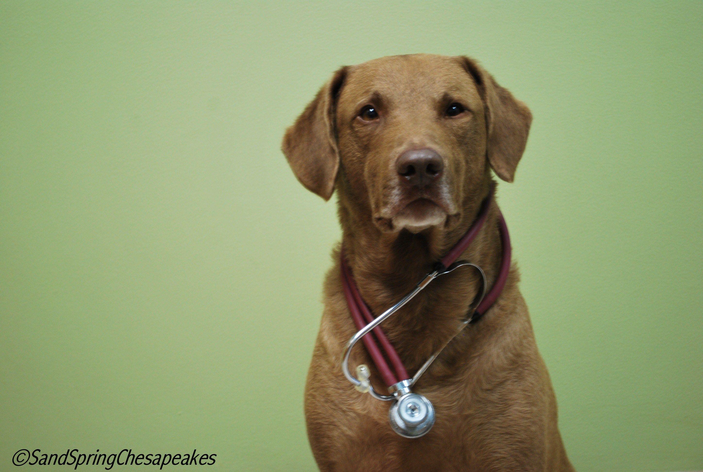 September Is National Pet Insurance Month Part 2 Mutt