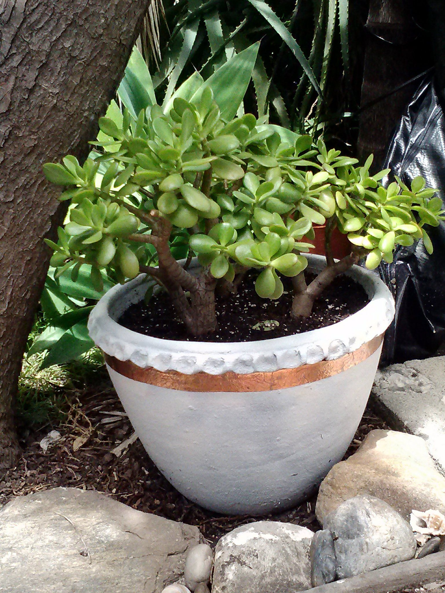 Very Large Jade In A Giant Clay Pot Pot Found Sitting Next To Dumpster I Have Painted It And Added Copper Trim Pot Succulent Planter Planter Pots