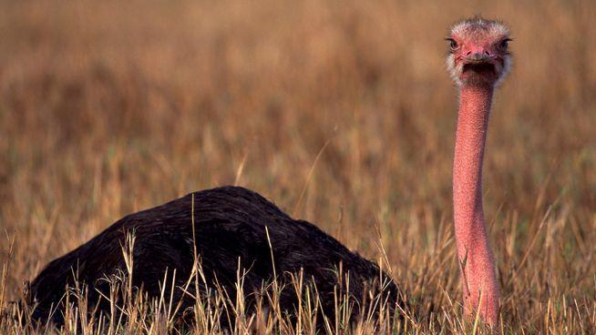 el ave natural más grande