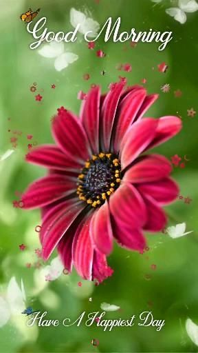 Beautiful Good Morning Video, Flowers Video, Good Morning