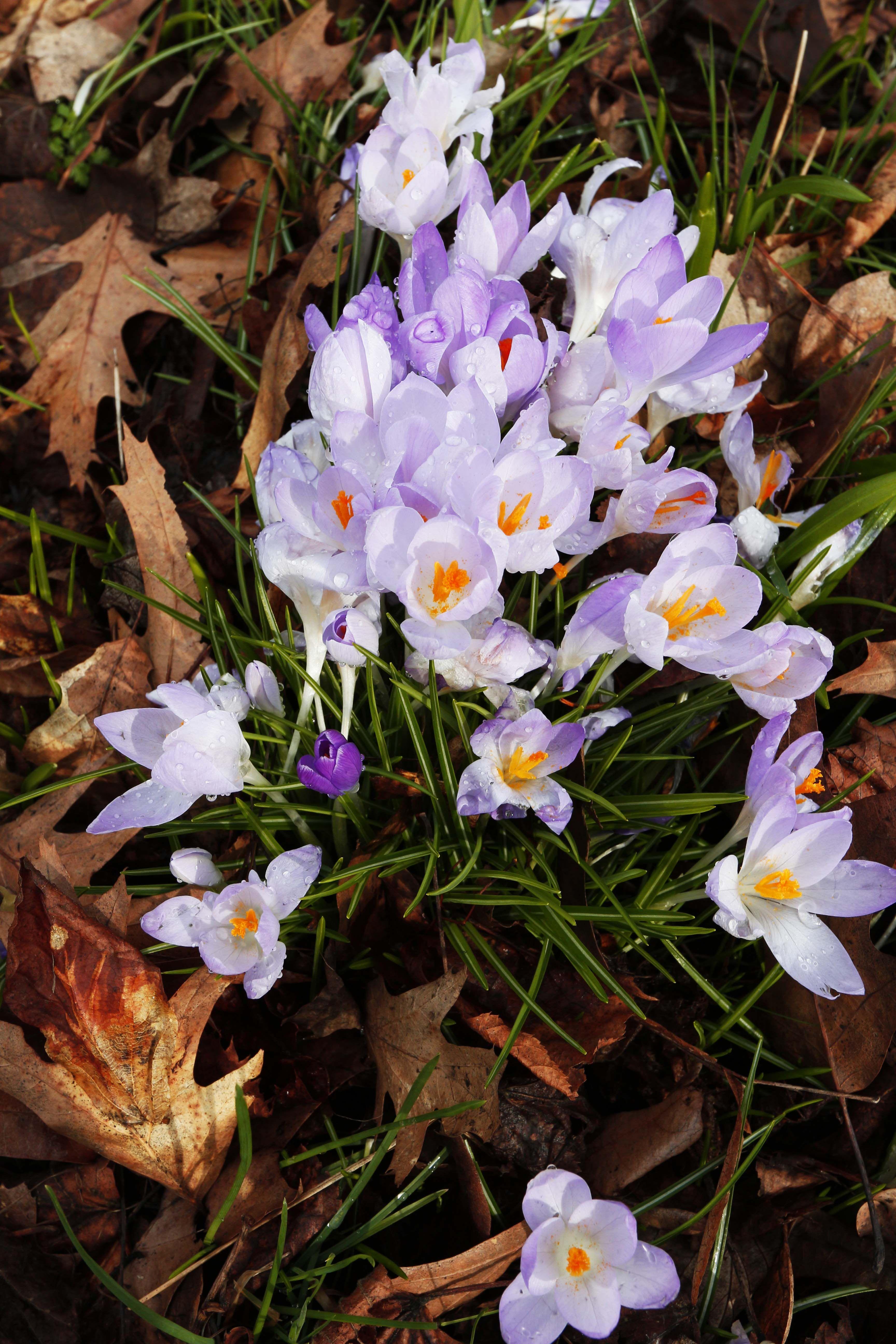 A Spring Stroll Through Kew Gardens In London Kew Gardens Early