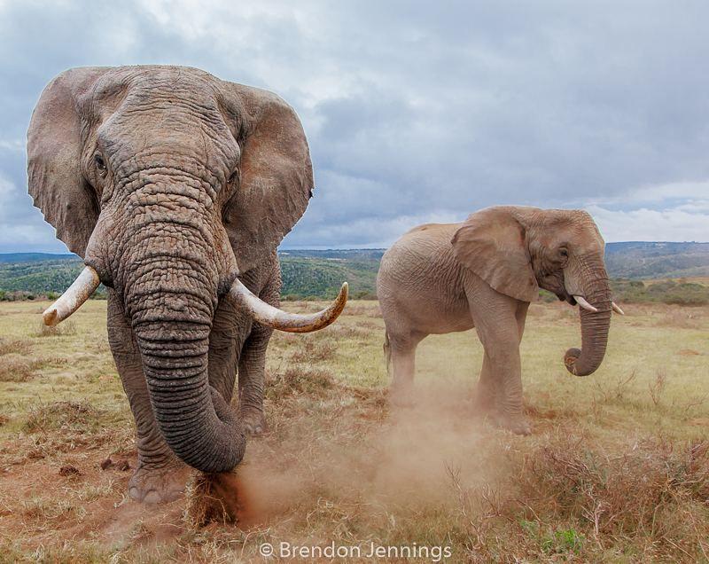 Pin de Fe-d. Federico en Elefantes y Leonés.   Pinterest   Elefantes