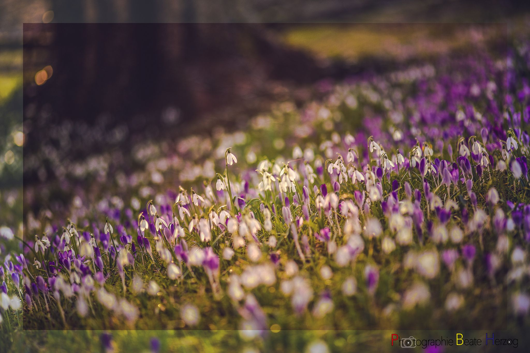 Photo Spring Awakening by Beate Herzog on 500px