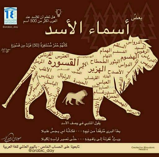 اسماء الاسد حيوان Lion Names In Arabic Ther Is More Than 500 Name For Lion Beautiful Arabic Words Funny Arabic Quotes Arabic Language