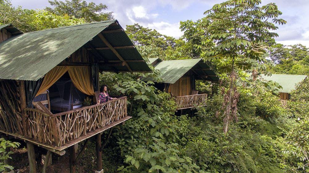 Image result for rainforest lodge