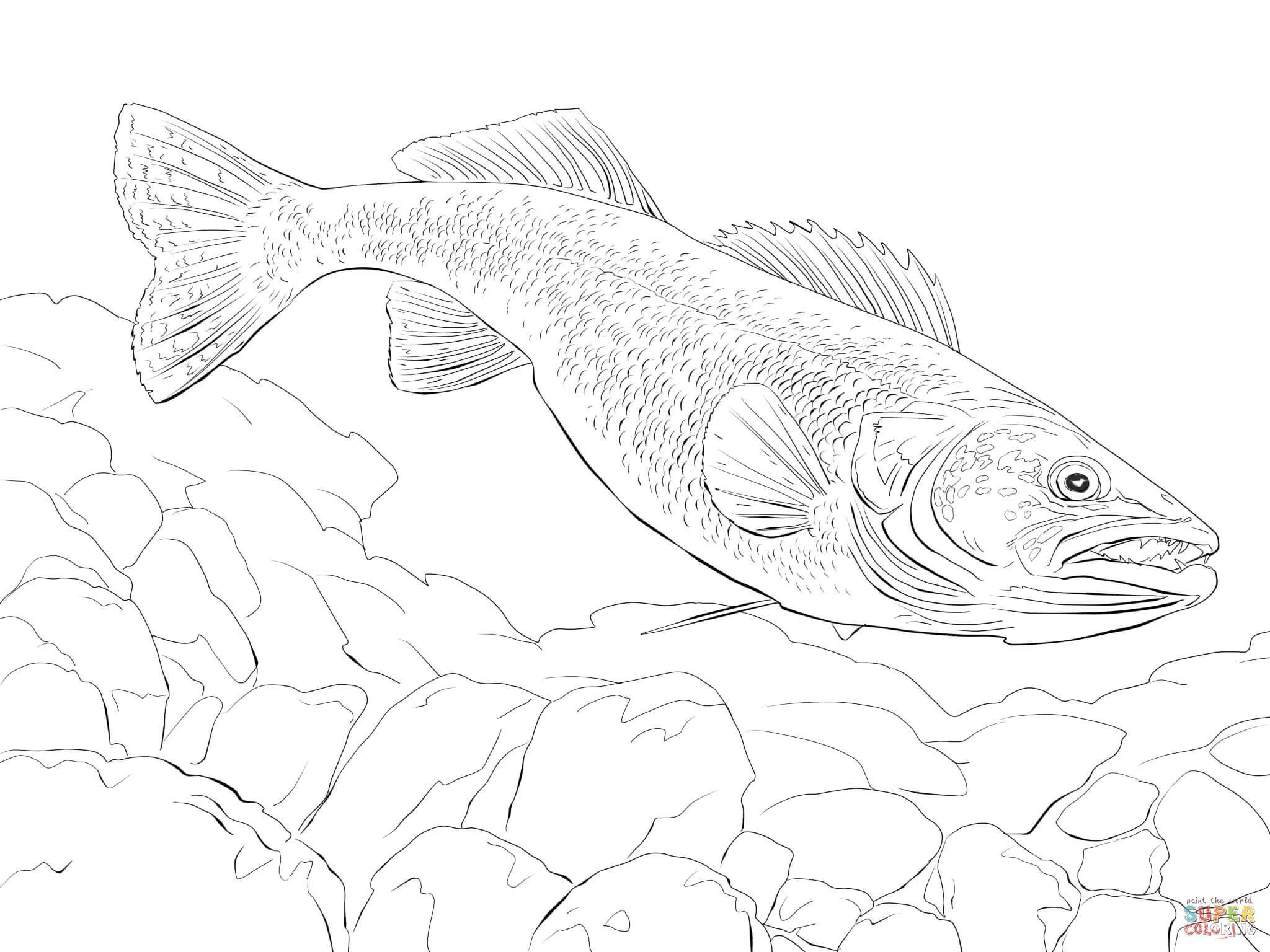 Walleye Fish Coloring Page Fish Coloring Page Walleye Fishing