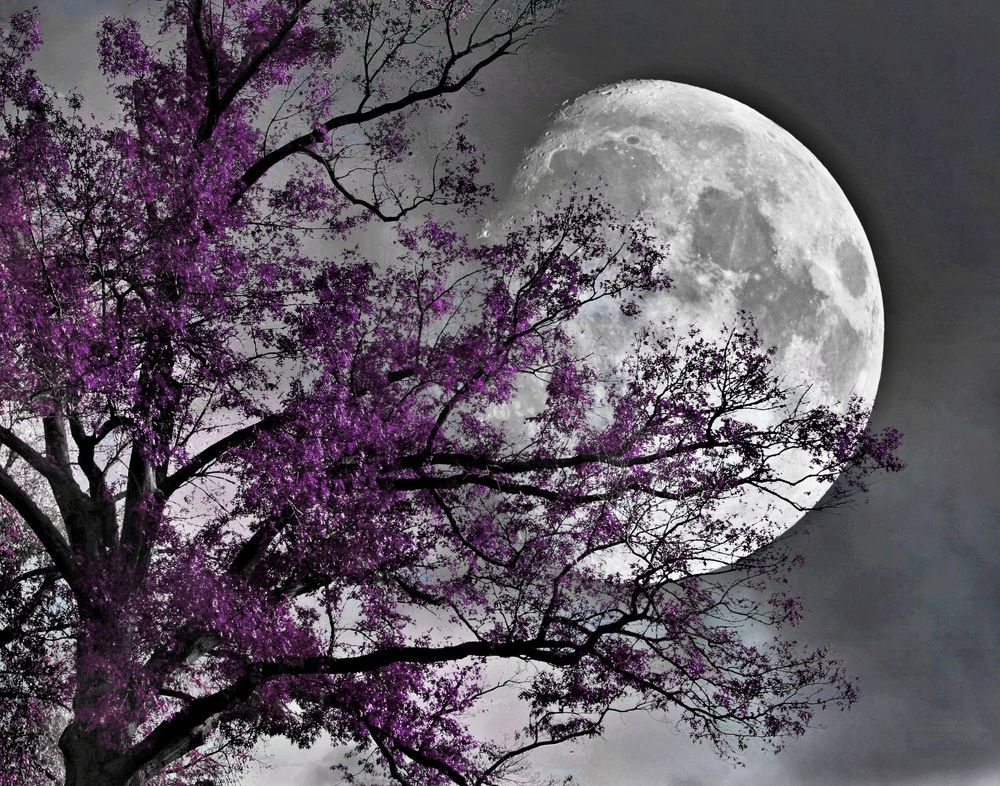 Black White Purple Tree Moon Bedroom Wall Art Decor Matted