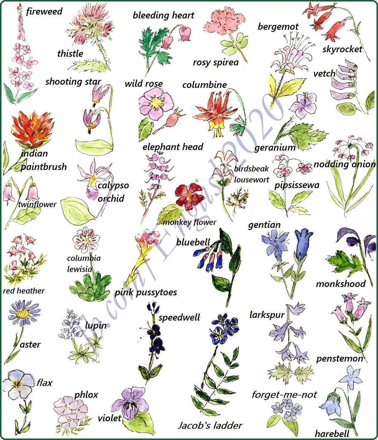Vocabulary Flowers Osvita