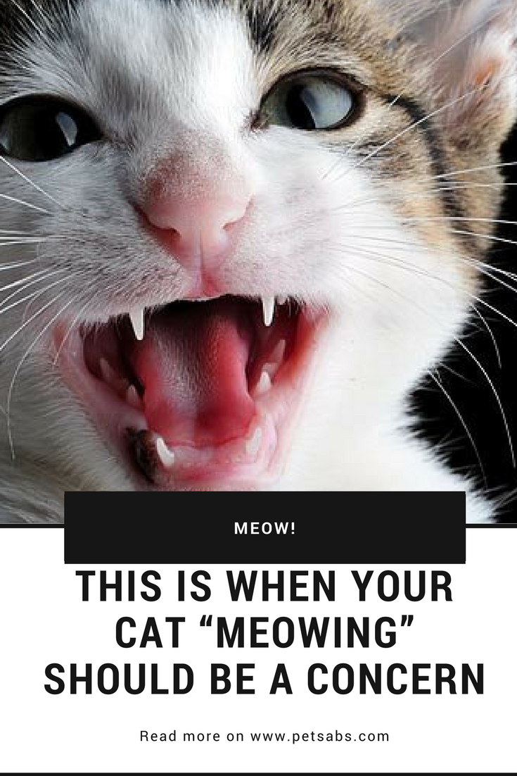 This Is When Your Cat Meowing Should Be A Concern Cats Pet Parent Animal Lover