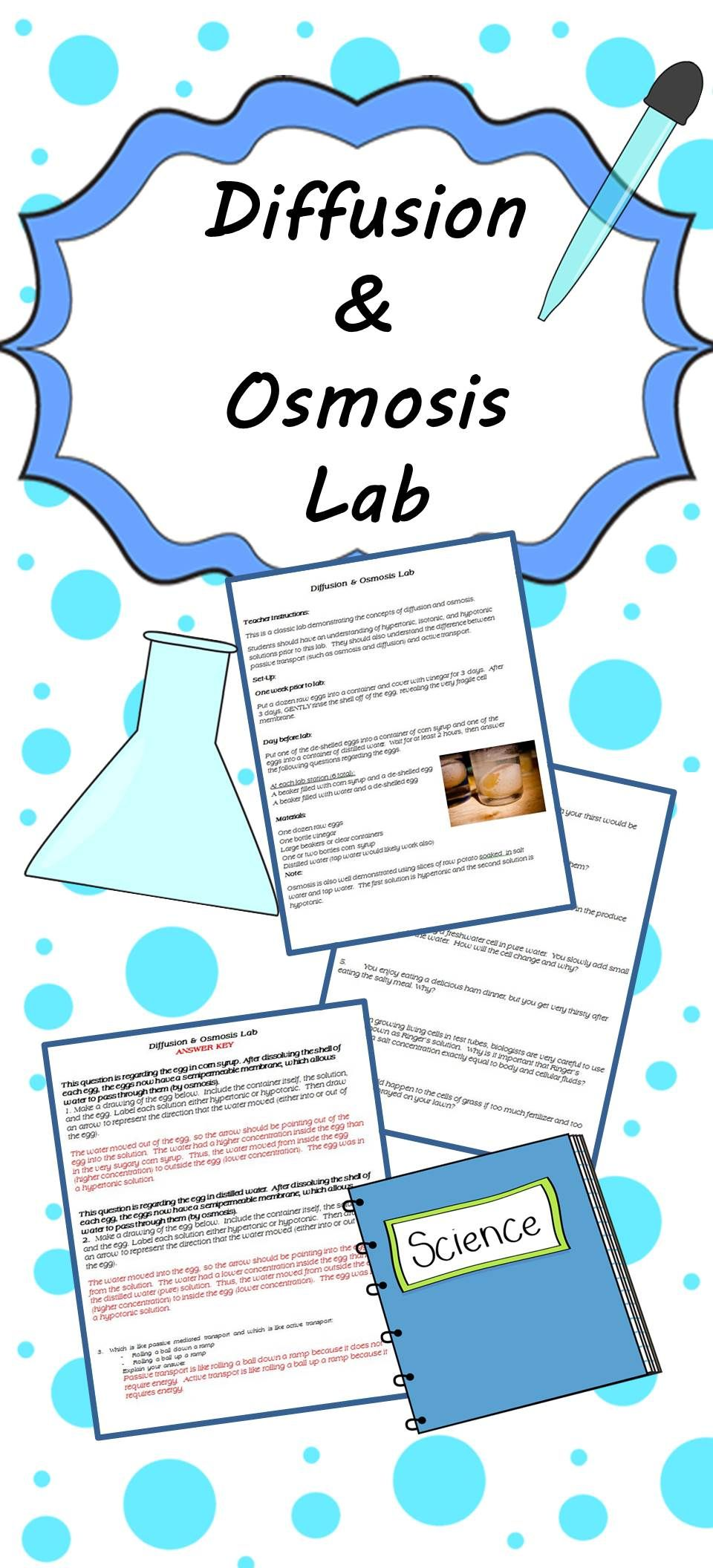 Osmosis Diffusion Inquiry Lab | Teaching science, Science ...