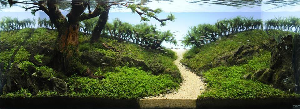 """A Road to Paradise"" by Fiona Tu (Japan)    simonsaquascapeblog.tumblr.com"