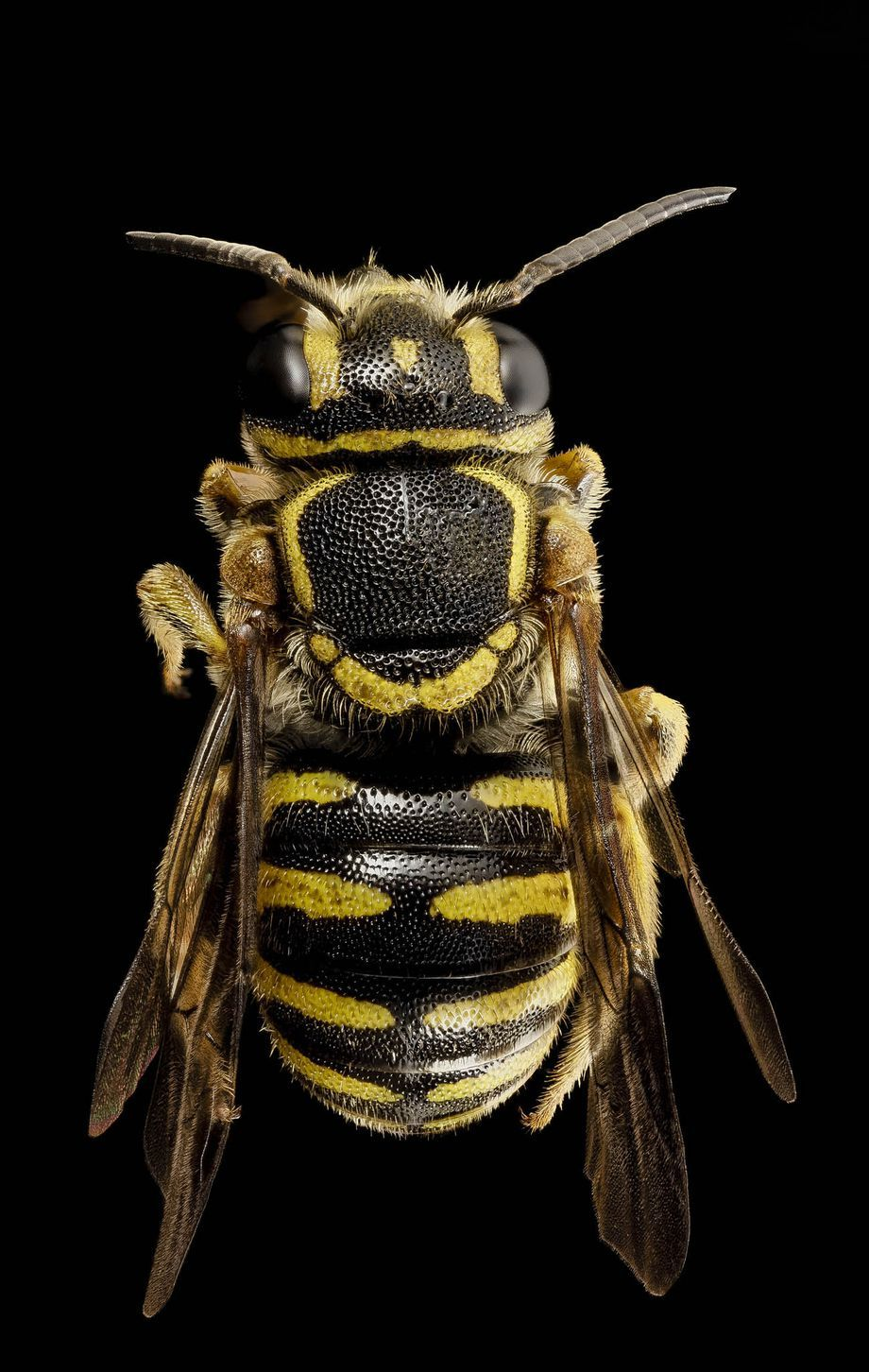 """World Bee Day: 20 photos of bees that will make you say """"damn, bees are beautiful"""" - Vox"""