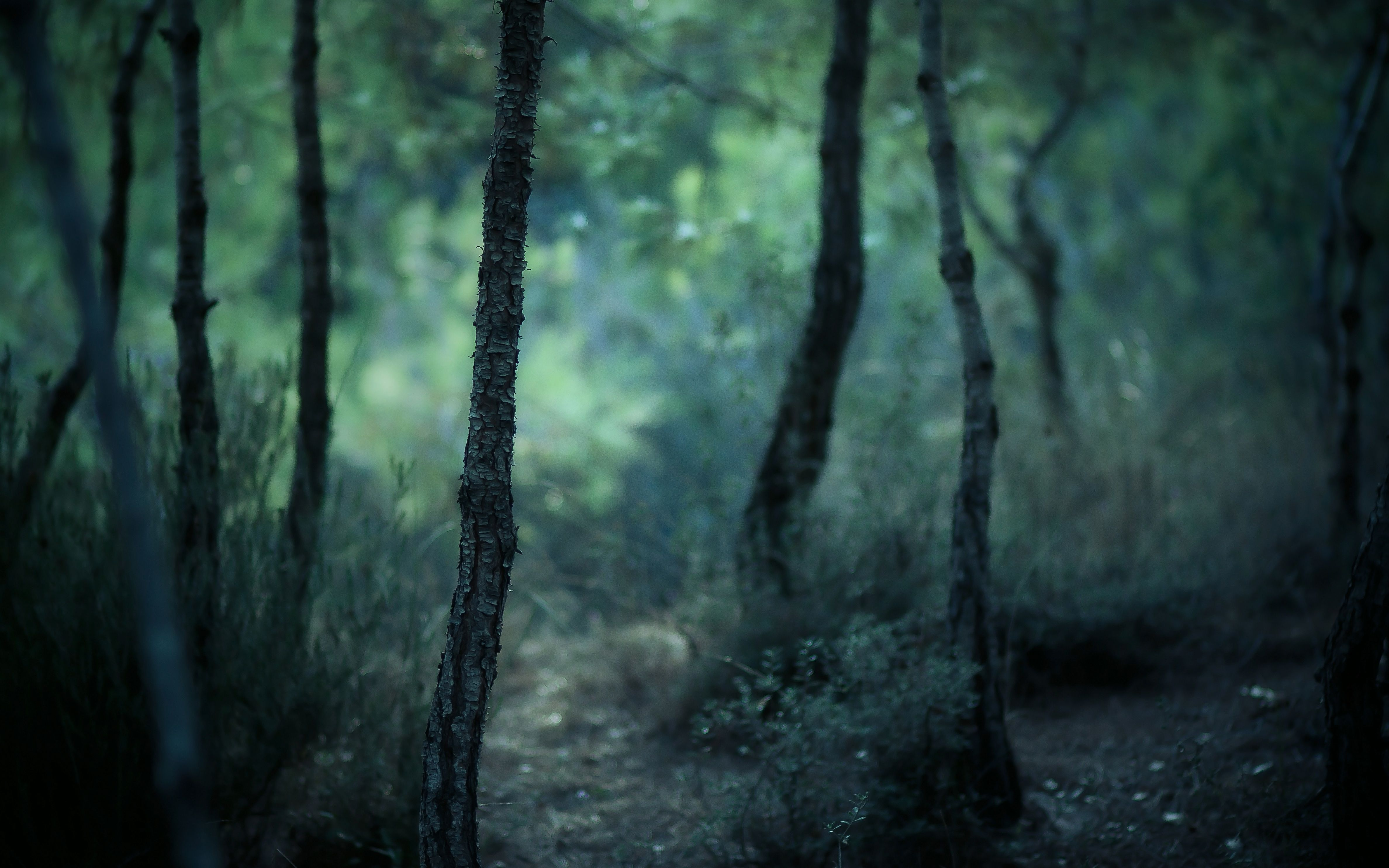 Earth Forest Beautiful Green Path Misty