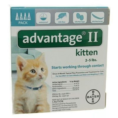 Bayer Advantage 2 Kitten 4pack 25 Turquiose You Can Get More Details By Clicking On The Image Cat Fleas Flea Treatment For Kittens Flea Medication For Dogs