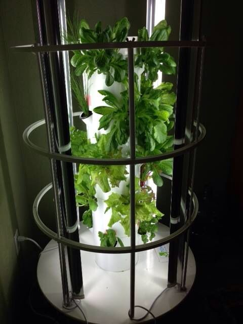 My friends Tower Garden in Alaska, they\'re growing indoors. Some ...