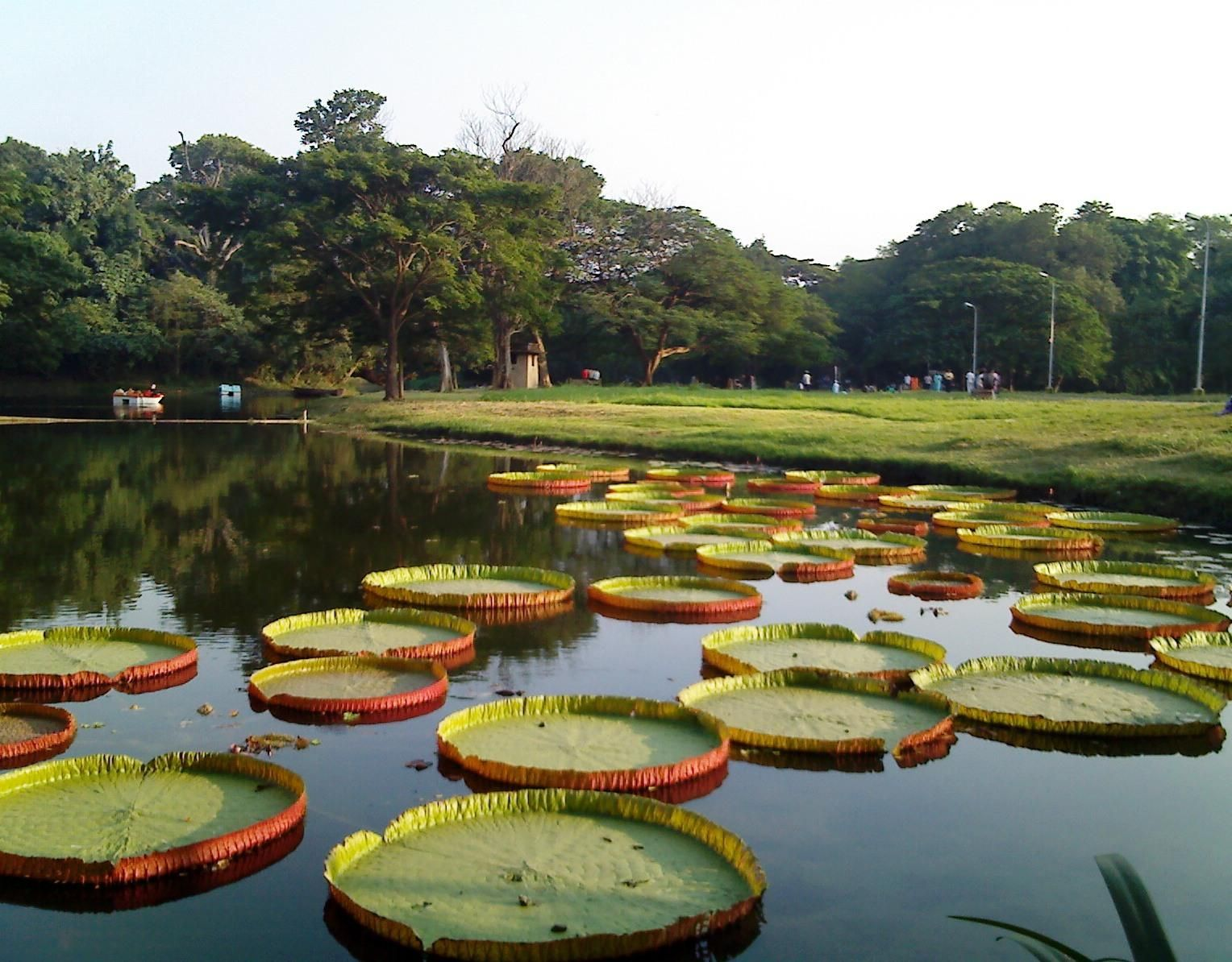 kolkata Google Search Botanical gardens, Garden images