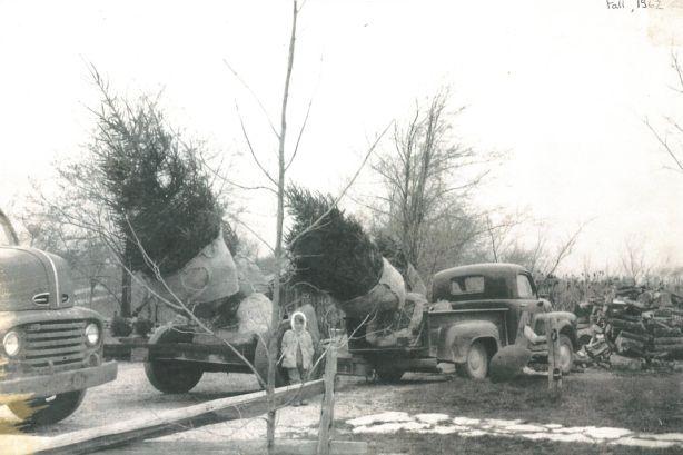 Still making holidays bright   Christmas tree farm, Holiday, Tree farms